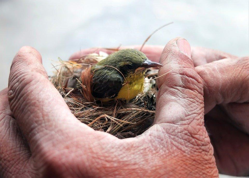 Der kleine Mutmach-Vogel (Geschichte)